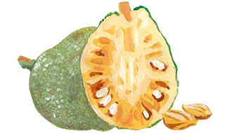 Illustration of Jackfruit