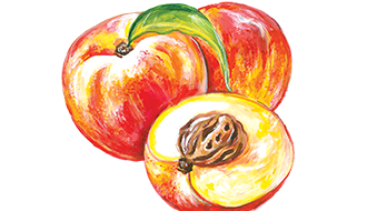 Illustration of a Peach