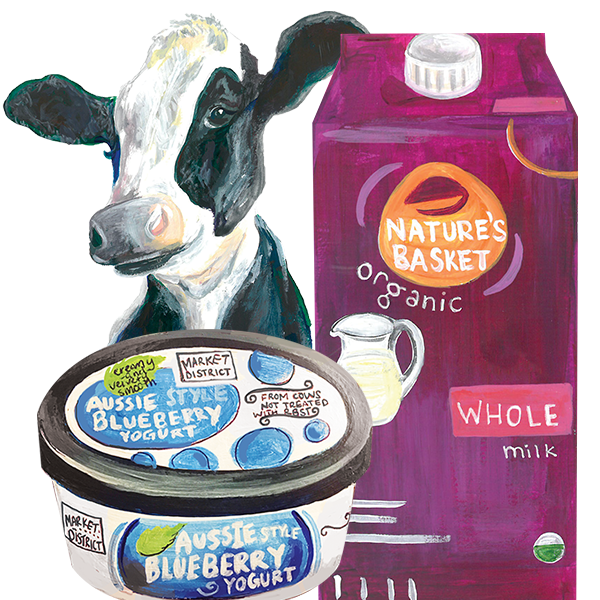 Illustration of a cow, Market District Australian Yogurt and Nature's Basket Whole Milk